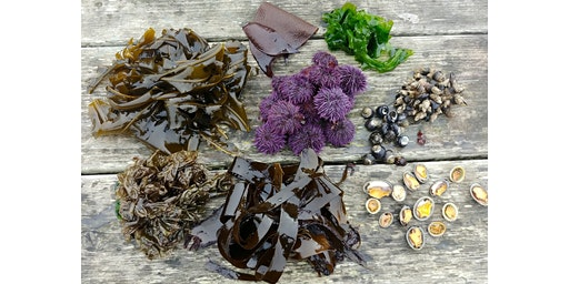 Tidepool Foraging Class with Sam Greenberg