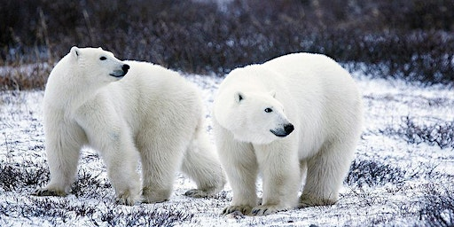 Polar Animal Family Science Day (3:00pm)