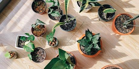 Indoor Plant workshop 24035 tickets