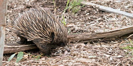 Nature Talks in the Library: Echidnas tickets