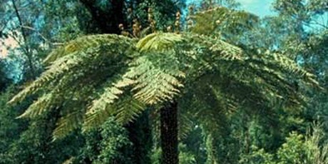 Walking with Dinosaurs at the Botanic Garden (Guided Walk) tickets