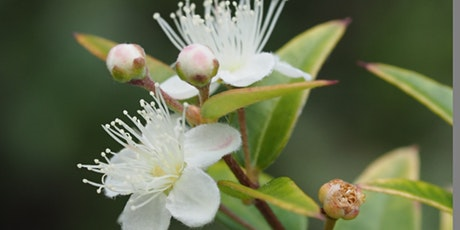 Native Plants - Foods and Uses  (Guided Walk) tickets