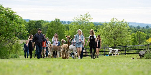 Women Who Explore: Toronto and Southern Ontario - Hiking with Alpacas!