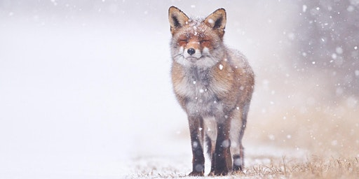 Creatures of the Wild Winter