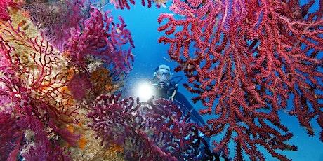 J'ai RDV avec la Biodiversité : aujourd'hui, la vie des petits fonds marins billets