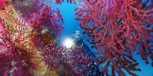 J'ai RDV avec la Biodiversité : aujourd'hui, la vie des petits fonds marins