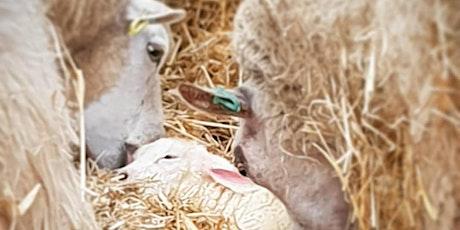VIP Lambing at JC Farm 2020 tickets