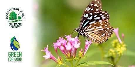 Bees, Birds, and Butterflies tickets