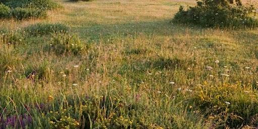 Greenham Common Bird Walk