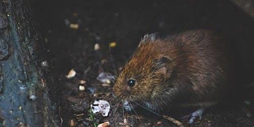 NPTC Rats & Mice Pest Control