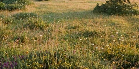 Greenham Common Bird Walk tickets