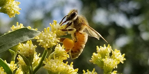 The Honeybee Buzz: The HEROES of our planet, making honey happen