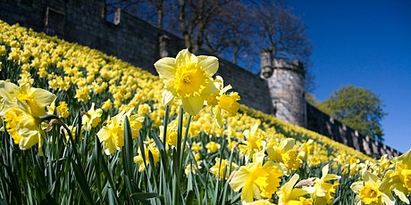 Mass Walk - City Walls Daffodil Trail tickets