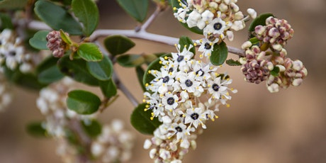 Family Friendly Community Hike and Potluck-Come See Ceanothus Blooming! tickets