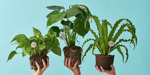New Year, New Leaf Sale – Houseplants, Planters, and Potting Supplies!
