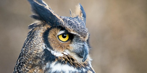 Rescheduled - Owl Prowl at Proud Lake State Recreation Area