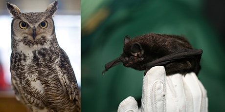 The Birds and the Bats: Guide to Backyard and Local Wildlife Care tickets
