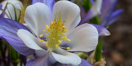 HPEC Workshop Series: Botany for Beginners tickets