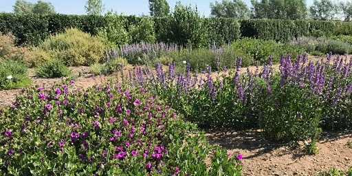 HPEC Workshop Series: Landscape Design with Native Plants