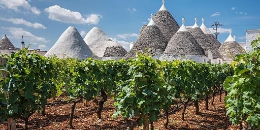 Fermentation Class:  Southern Italy