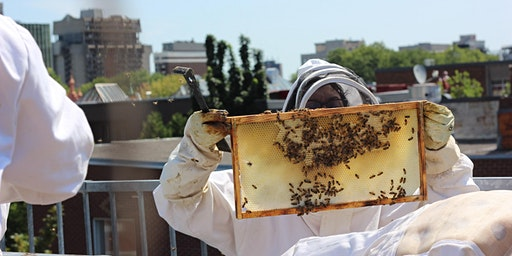 Nous Recrutons chez Apiculture SR is Recruiting!