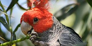 Junior Rangers Bird Brain - Wilsons Promontory...