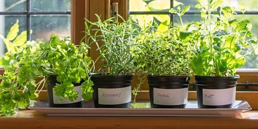 Windowsill Organic Herb Gardens