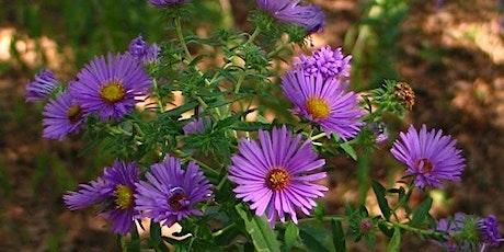 Native Plants tickets