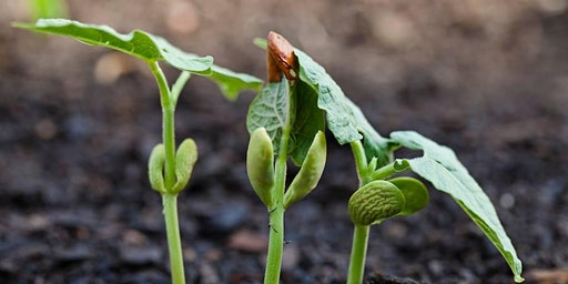 SEED STARTING SUCCESS FOR THE NORTHERN GARDENER