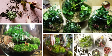 Tipsy Terrarium Workshop tickets