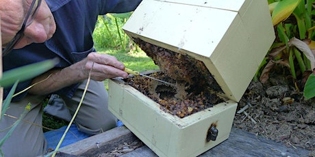 Keeping Native Bees  Masterclass with Tobias Smith tickets