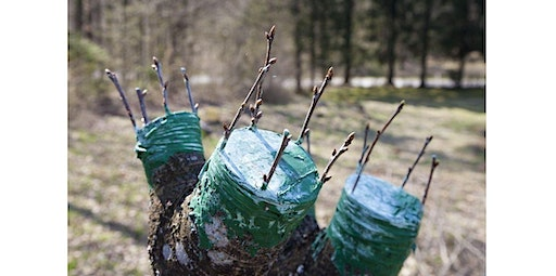 Absolute Beginners Series: Grafting Urban Fruit Trees (03-15-2020 starts at 2:00 PM)