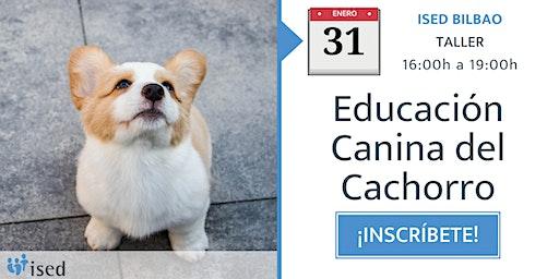 Taller de Educación Canina del Cachorro 31 de enero - tarde