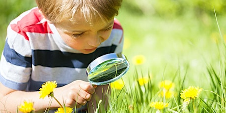 Wildlife Club at Sutton Bank: Big Butterfly Count tickets