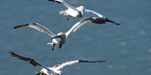 Soaring Seabirds