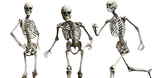 Expertmeeting 'Met je skelet op pad' 4 maart 2020 van 17.00 tot 20.00 uur