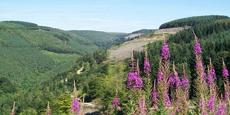 Cwmcarn Epic.   Women Only Mountain Bike Guided Ride tickets