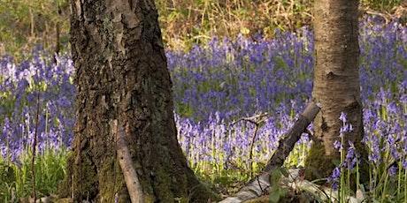 Woodland Walk with Fran Halsall: Bretton Clough tickets