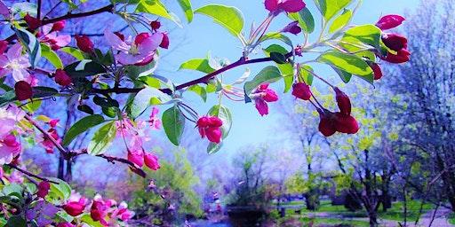 Spring Awakens Celebration