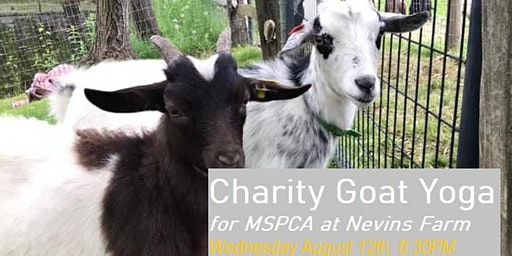 Charity Goat Yoga (Fundraiser for MSPCA at Nevins Farm)