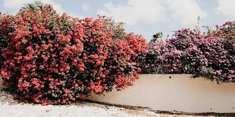 Vrij van Schaamte - Het Koningshuis op Curacao tickets