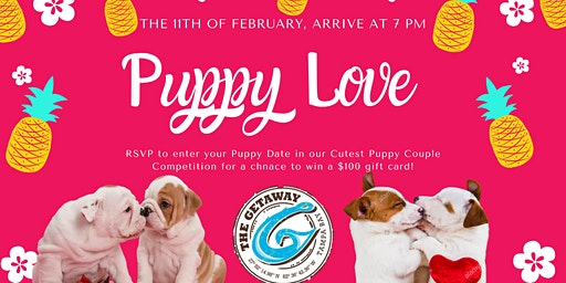 Puppy Love Cutest Puppy Couple Competition