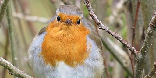 Birdwatching – Understanding Birds with Nature Stuff
