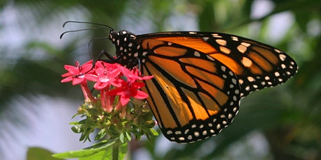 Butterfly Fiesta! At the Imogene! tickets