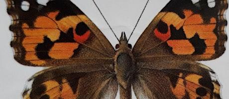 Capturing the Seasons - Field Sketchbook workshop - butterflies & moths (EW tickets