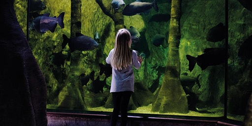 Quiet at the Aquarium - Annual Pass Bookings 2nd February 2020