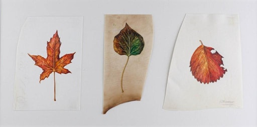 Capturing the Seasons - Field Sketchbook workshop  - Shades of Autumn (EWC
