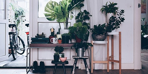 Curate Your Urban Jungle!