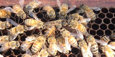 Intro to Beekeeping- April 18, 2020 9a-3p tickets