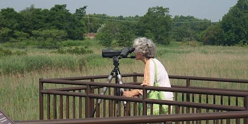 Hawk Rise Songbird Search